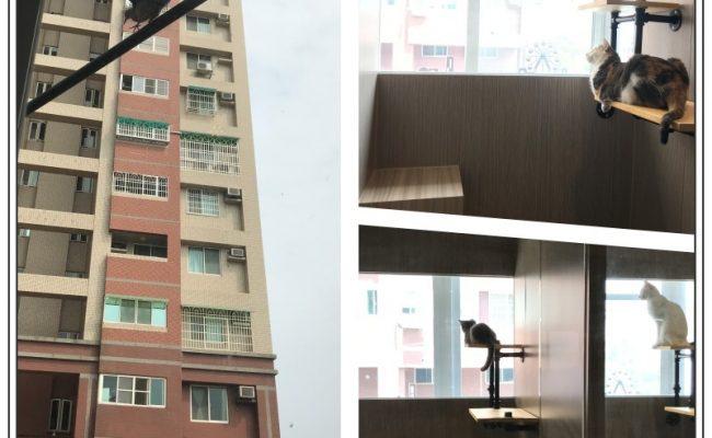 windows bird
